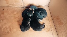 New born baby kittens sleeping together in a carton box. Top view of four new born kittens sleeping together in a carton box stock video