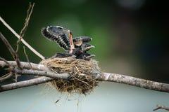 New-born birds Stock Photo