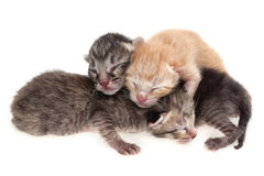 New born cat. New born kittens on white background Royalty Free Stock Photos