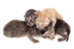 New born cat Royalty Free Stock Photos