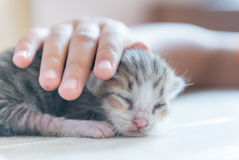 New born cat and little hand Stock Image
