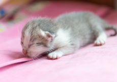 New born cat sleep on cloth Stock Images