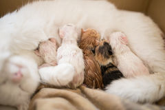 New born cats Stock Photos