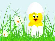 New born chick Royalty Free Stock Image