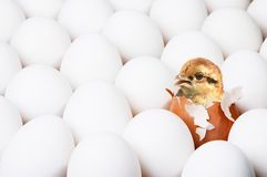 New-born chick. New-born  chick in red egg