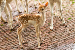 New born deer Stock Photos