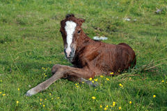 New born foal Stock Photos
