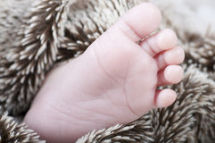 New born foot Royalty Free Stock Photos