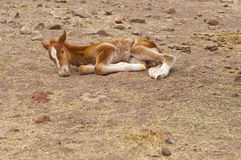 New Born Horse Stock Photos