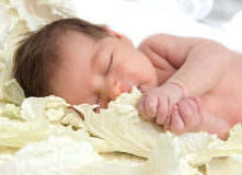 New born infant child baby girl lying and sleeping in cabbage le Stock Photos