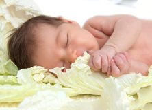New born infant child baby girl lying and sleeping in cabbage le Stock Images
