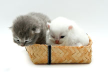 New born kitten Royalty Free Stock Photos