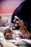 New Born Kitten Stock Images