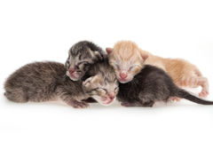 New born kitten background Royalty Free Stock Image