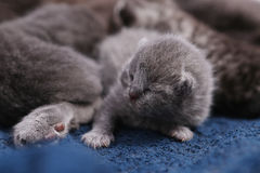 New born kitten Stock Image