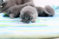 New born kitten, first day of life Stock Photos