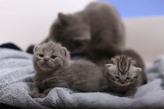 New born kittens, first day of life Stock Photo