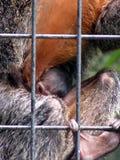 New born monkey stock images