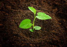 New born plant Royalty Free Stock Photo