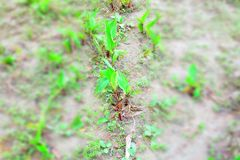 Growing plant from de dry sand royalty free stock images