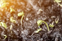 New born of plant and tree. Growth and fresh nature stock photography