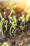 New born of plant and tree. Growth and fresh. Nature royalty free stock photography