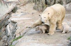 New born polar bears Stock Photo