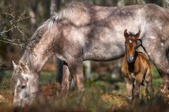 Wild foal with mother Stock Photo