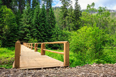 New bridge from road to forest. horizontal. New wooden bridge leading from the unpaved road to a dense coniferous forest. horizontal Stock Image