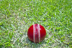 New Bright Red Cricket Ball On Green Grass Field Royalty Free Stock Photography