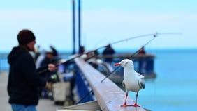 New Brighton Pier Christchurch - New Zealand Stock Photography