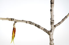 New bud on a tree branch Stock Image