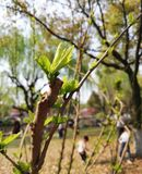 New Buds in the Park stock photography