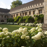 The New Building of Oxford Magdalen College, Stock Image