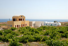 New buildings and vineyard in Greece Royalty Free Stock Photo