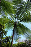 New caledonia fern royalty free stock photos