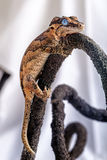 New caledonian gecko Stock Photography