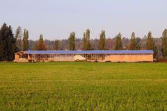 New Cattle Barn Construction Stock Photography