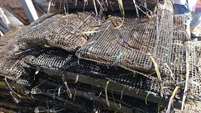 New Caught Oysters in Nets Royalty Free Stock Photo
