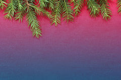 New Christmas background with real pine tree branches Stock Images