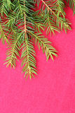 New Christmas background with real pine tree branches Stock Image