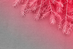 New Christmas background with real pine tree branches Royalty Free Stock Image