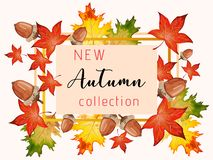 New collection banner for Autumn with fall leaves. New collection banner for Autumn with colorful seasonal fall leaves, rowan and acorns for shopping discount royalty free illustration