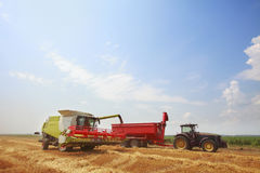 New combine harvester working in field Stock Photo