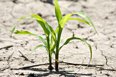 New Corn Stock Images