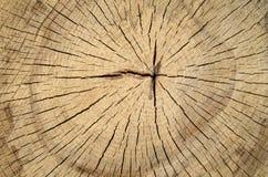 New cracked stump closeup Royalty Free Stock Photo