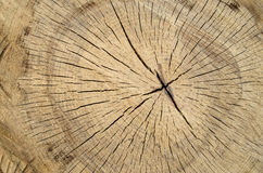 New cracked stump closeup Stock Images