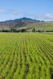 New crop, mountain background, Half Moon Bay, California stock photos