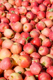 New crop of red Gala apples Stock Photos