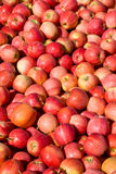 New crop of red Gala apples Royalty Free Stock Images